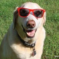 Photo Challenge: Lens-Artists #61 - Precious Pets