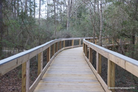 Curve in Boardwalk at Falling Waters State , Florida