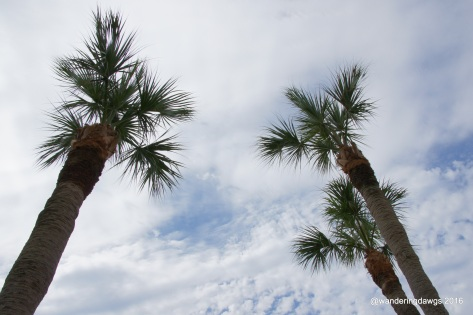 Look up at the palm trees
