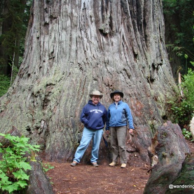 We were tiny beside the Big Tree, Redwoods National Park, California