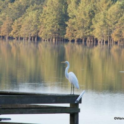 Egret on the fishing dock