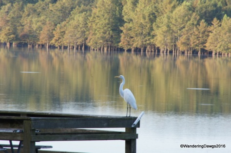 Egret on the fishing dock