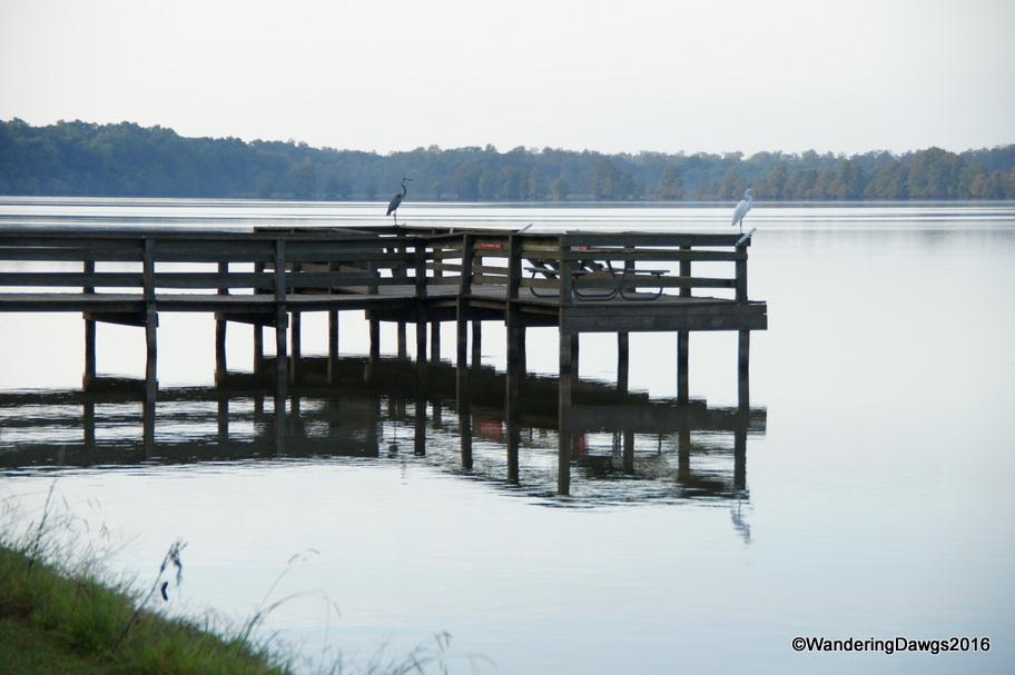 Morning on the fishing dock