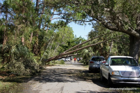 Big trees were blocking roads in our neighborhood
