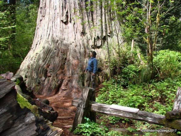Redwoods National Park