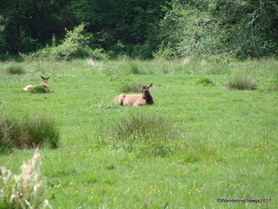Elk Meadow in Redwoods National Park
