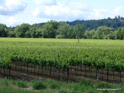 One of the many vineyards in the California wine country
