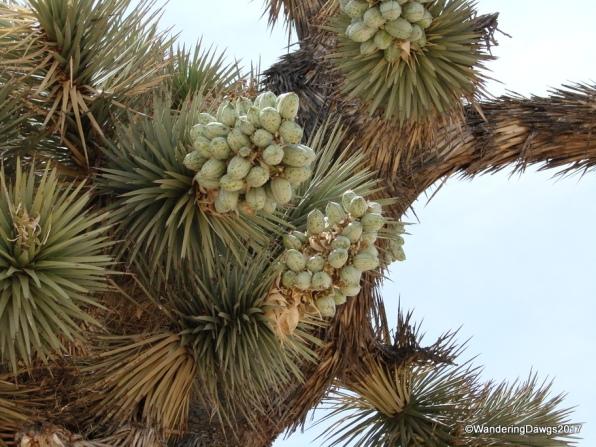 In the Mojave Desert