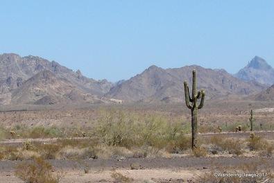 Chocolate Mountains and Saguaro Cactus