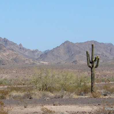 Chocolate Mountains and Saguaro Cactus