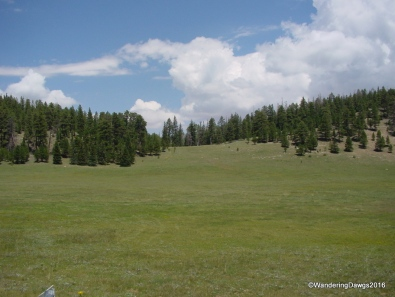 Meadow on the way to the North Rim of the Grand Canyon