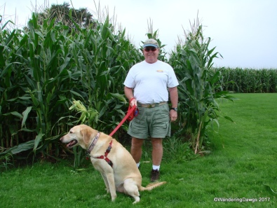 It was easy to imagine the players coming out of the corn to play ball