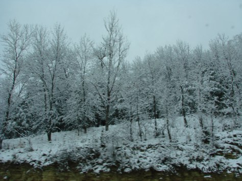 Icy trees beside the interstate