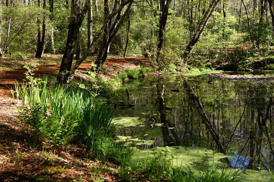 Lady Bird Johnson Wildflower Trail at Callaway Gardens