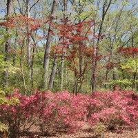 Spring at Callaway Gardens