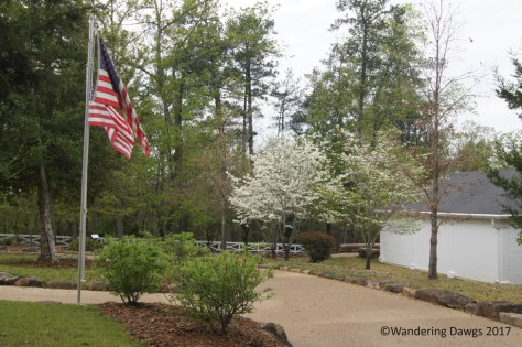 Dogwoods blooming at the Little White House