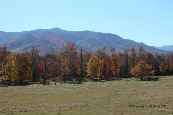 Horse pasture on Cades Cove drive