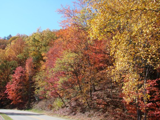 Fall in the Great Smoky Mountains at Cades Cove