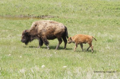 Mama and Calf
