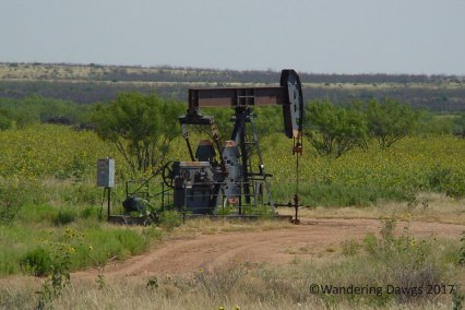A common sight in the Texas Plains