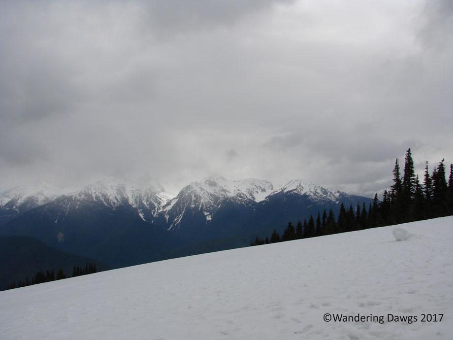 20070420Hurricane-Ridge-(14)
