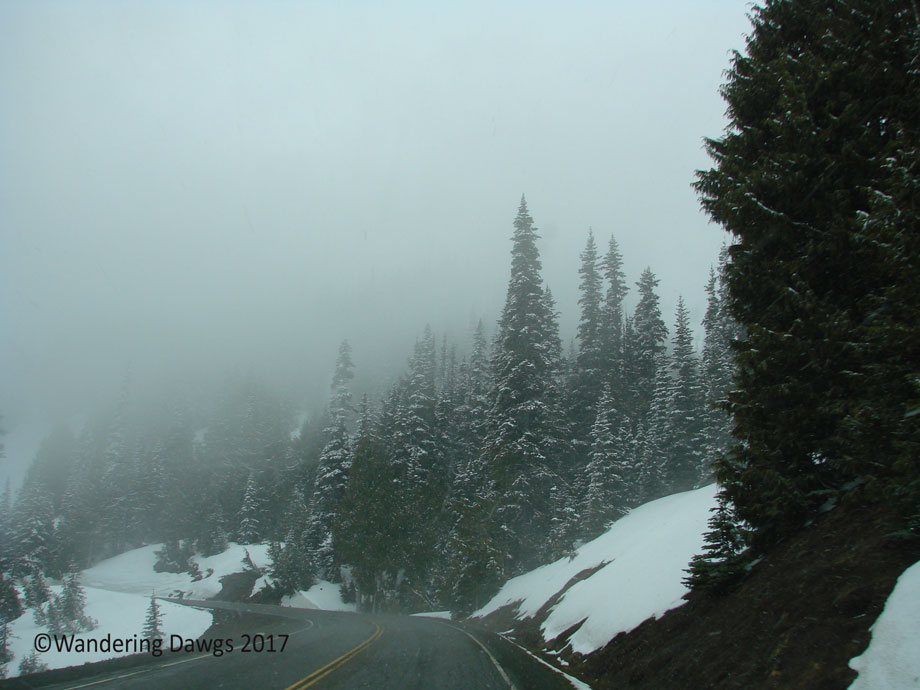 20070420Hurricane-Ridge-(8)