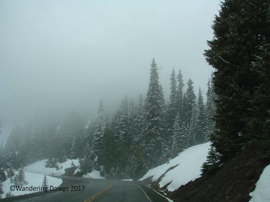 20070420Hurricane-Ridge-(8)