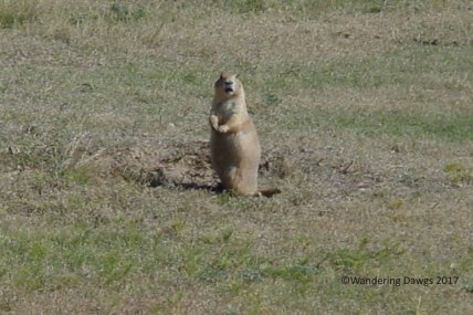 We passed a prairie dog town on the way to the tower