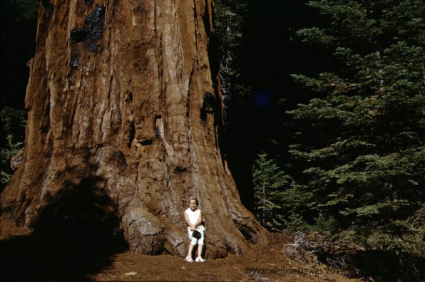 That's me when I was 8 years old sitting on the Big Tree in Redwood National Park