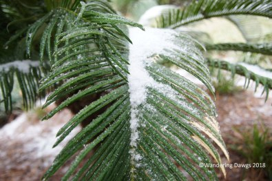 Snow covered palm fronds