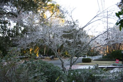 Icy Dogwood Tree