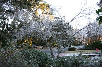 Icy Dogwood Tree