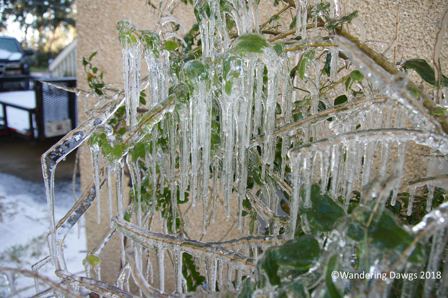 20180104Icy-Day-(51)