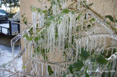 Icicles in January