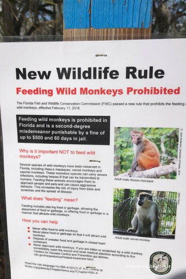 Monkeys in Florida?