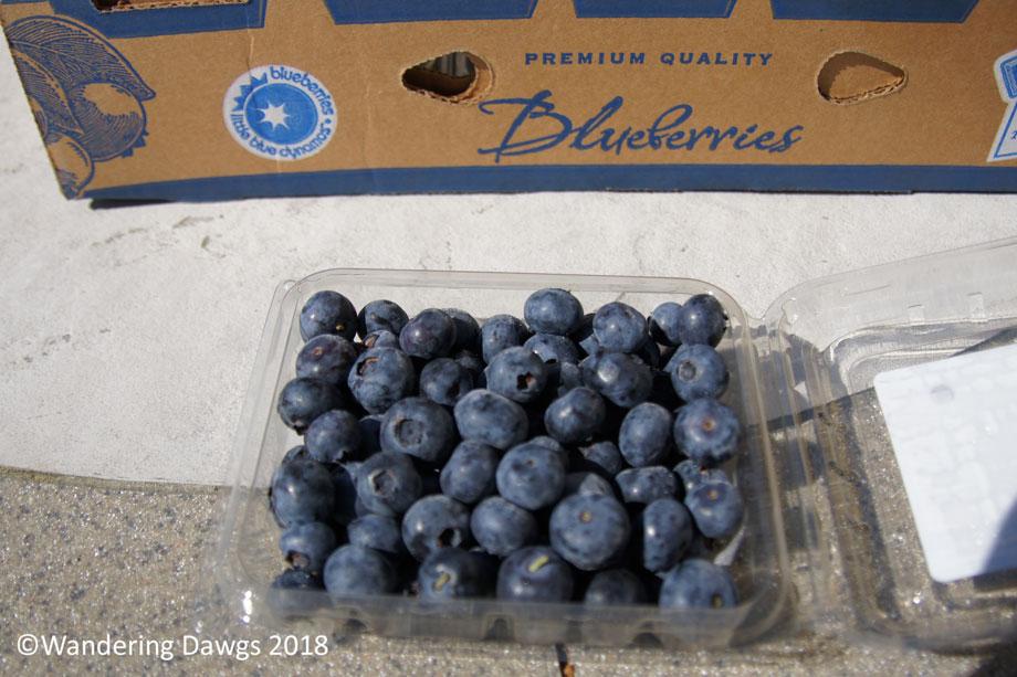 20180502Blueberries-(4)