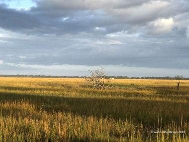 Early morning in the Georgia Salt Marsh