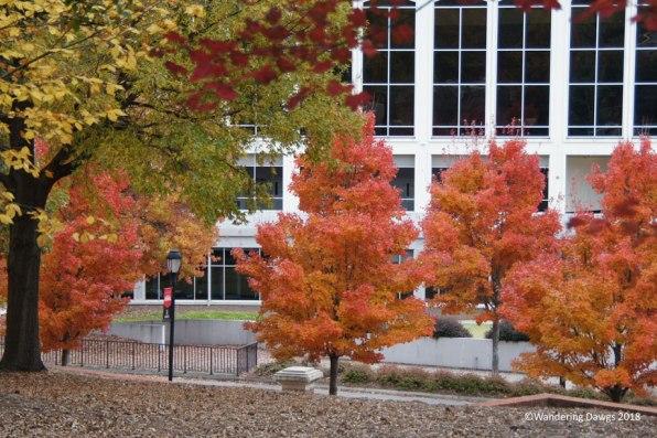 Brilliant autumn colors on the UGA campus