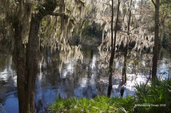 Suwanee River in White Springs, FL