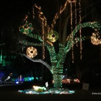 Festival of Lights and the Suwannee River