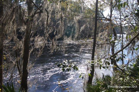 Big Shoals trail on the Suwannee River