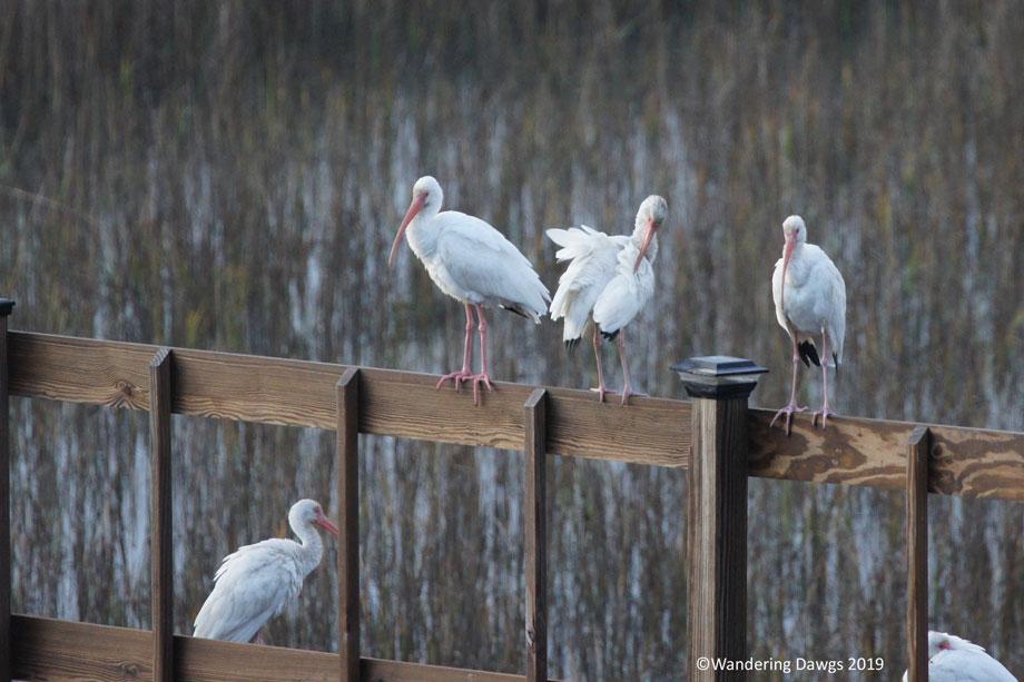 20190120--morning-birds-(1)