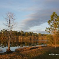 Sunsets and the Okefenokee Swamp