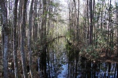 Okefenokee Swamp Park, Waycross, GA