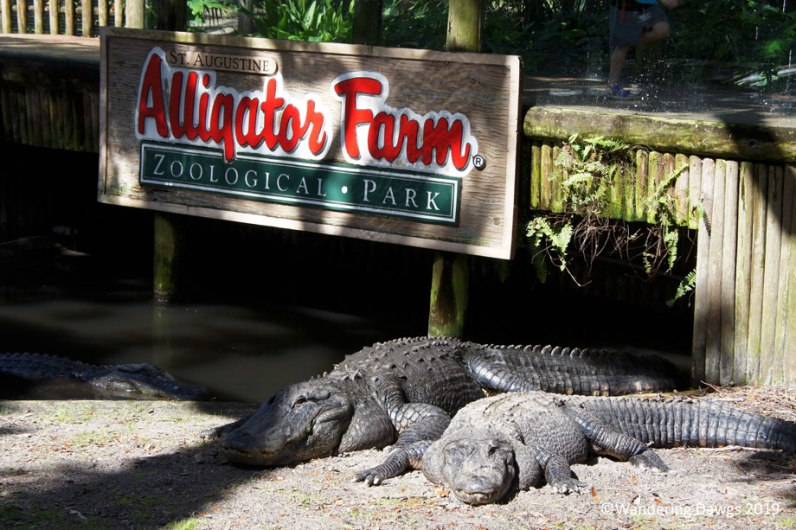 Saint Augustine Alligator Farm Zoological Park