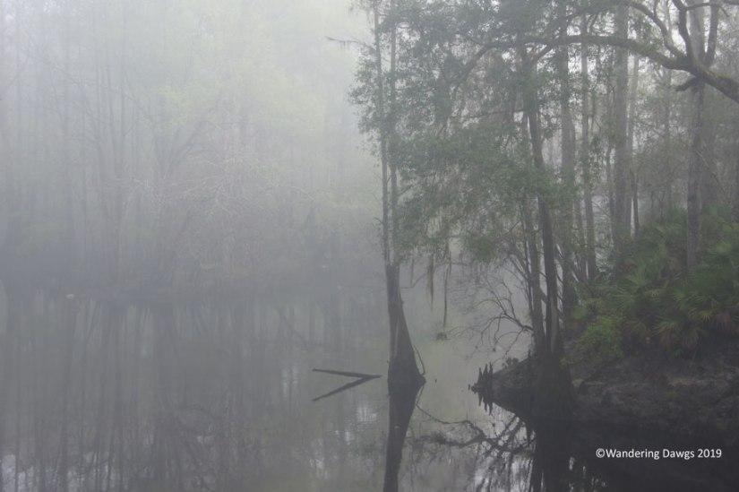 Foggy morning at the Santa Fe River in O'leno State Park, FL