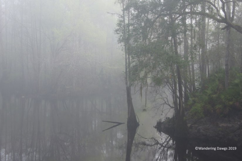 Foggy morning at the Santa Fe River in O'leno State Park, FL