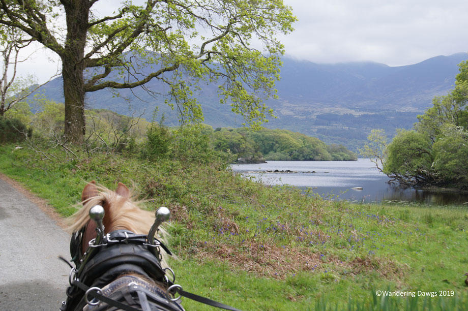 20190508-Day-8-Jaunting-Tour-Killarney-National-Park-Sony-(40)