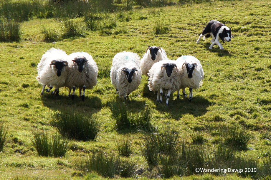 20190509-Day-9-Ring-of-Kerry-Sony-(95)
