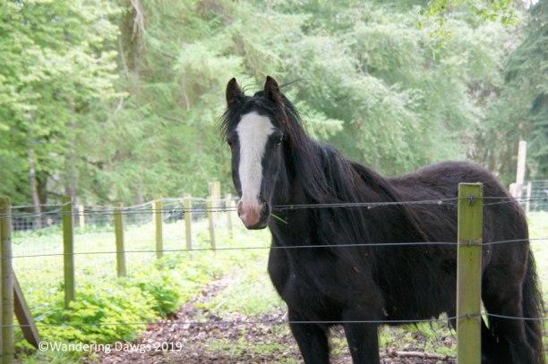 Horse at Fernie Castle